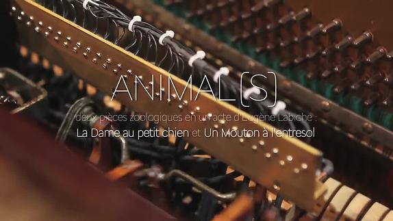 "Vidéo ""Animal(s)"" - Eugène Labiche, Jean Boillot - Teaser"