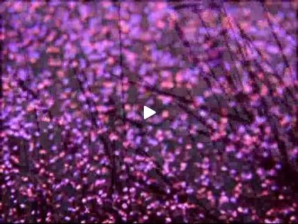 """Vidéo """"Amore"""", bande-annonce"""