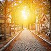 Accueil de « Rêve d'automne »