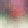 Image de spectacle Barbe-Neige et les sept petits cochons au bois dormant