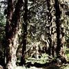 Image de spectacle Der Urwald