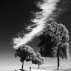 Accueil de « A quoi sert la neige ? »
