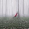 Accueil de « La Forêt où nous pleurons »