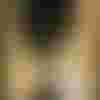 Image de spectacle Le Testament de Vanda