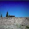 Accueil de « Le Bruit des arbres qui tombent »