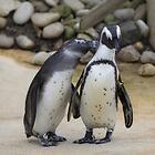 Pingouin (Discours amoureux)