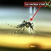 Image de spectacle Les Déterritorialisations du vecteur