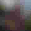 Image de spectacle Le Cercle de craie caucasien