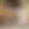 Image de spectacle Arlecchino servitore di due padroni (Arlequin, serviteur de deux maîtres)