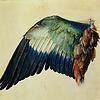 Accueil de « Les Oiseaux »