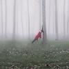 La Forêt où nous pleurons