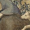 Accueil de « Hippolyte »