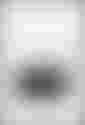 couverture du texte Les Unicellulaires