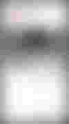 couverture du texte L'Affiche