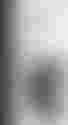 couverture du texte Mannekijn