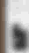 couverture du texte Peaux mortes