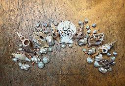 Inspiration pour couronne de coquillages